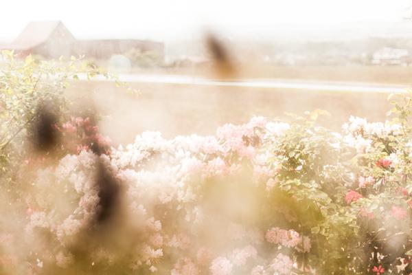 Silke Wedler Fotografie-10